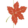 Fall 2017 Guided Nature Walk with Tom Tidman (AB PIP STEM activity!)