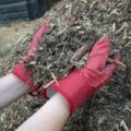 Can you help the High School Seniors…spread mulch?